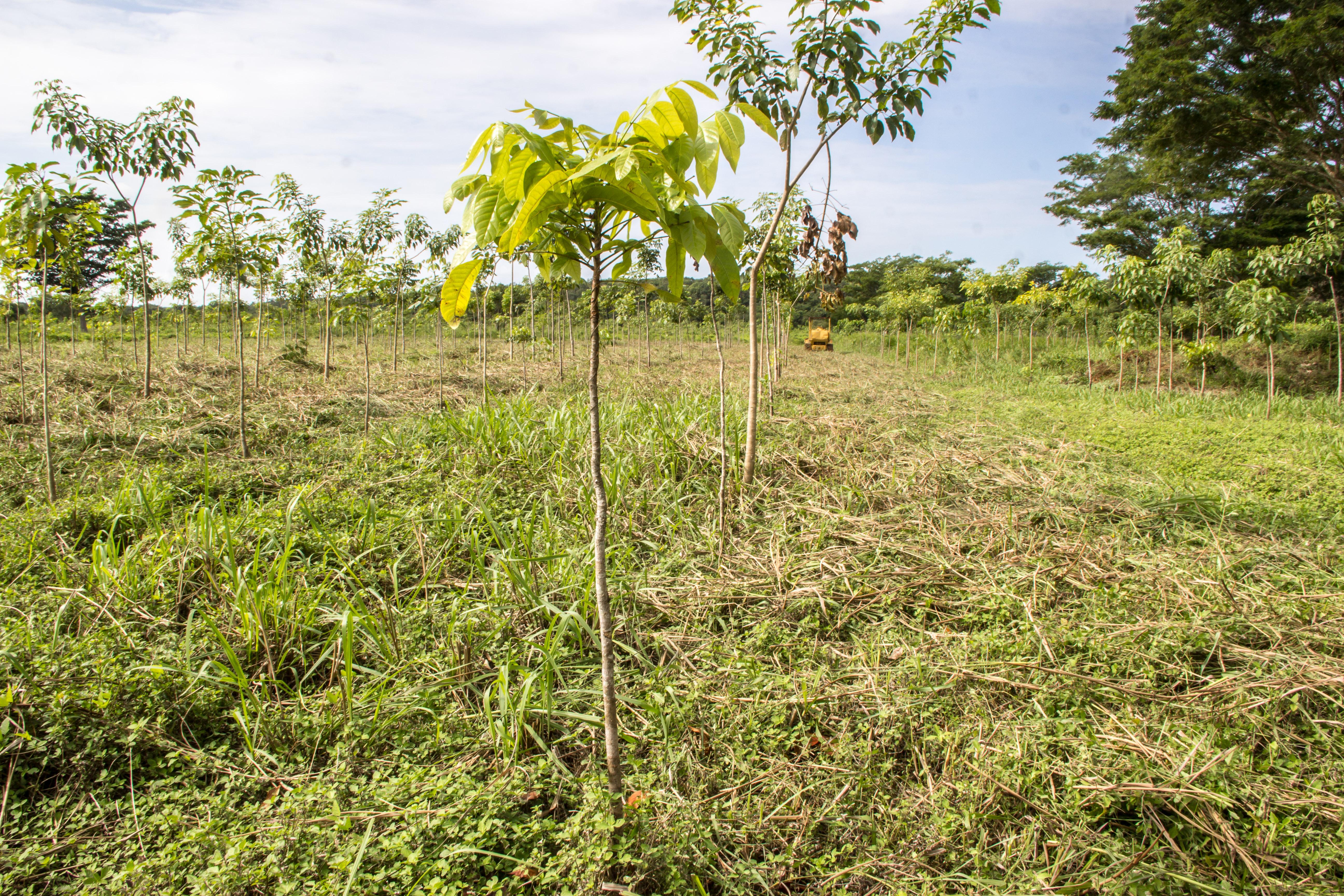 plant_yucatan_1_Photos_PFTP-3217